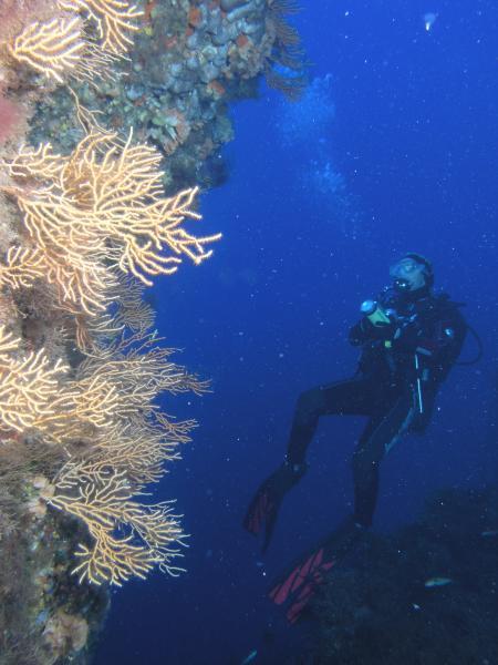 Ponza Diving (Ponza),Italien
