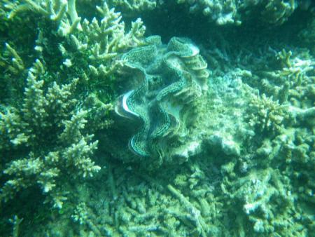 Tieti Diving,Neukaledonien