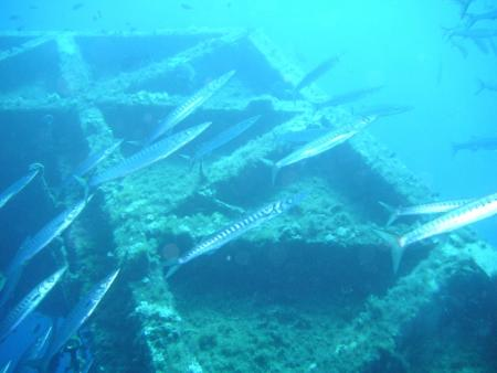 Salinas Diving Center,Ibiza,Balearen,Spanien