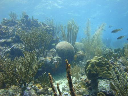 Curacao,Curaçao,Niederländische Antillen
