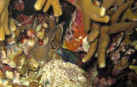Blue Abyss Dive Shop,Cebu,Philippinen