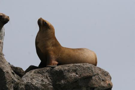 Seelöwenturm,Pucusana,Peru