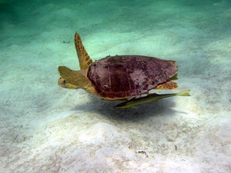 Blackbeard´s Cruise,Bahamas