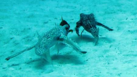 Karibik Diver,San Andres Island,Kolumbien