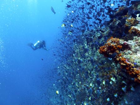 Bluemotion,Banda Inseln,Allgemein,Indonesien