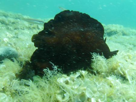 Punta Planka Diving,Ražanj,Kroatien