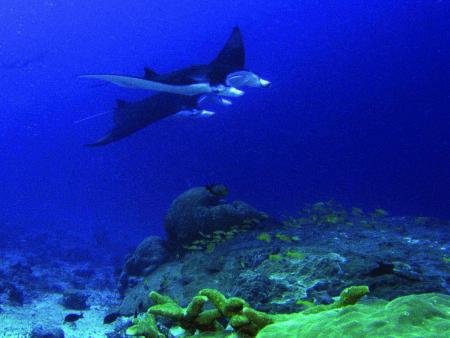 Gan,Addu Atoll,Diverland,Malediven