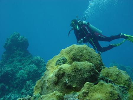 Dressel Divers / Cozumel,Mexiko