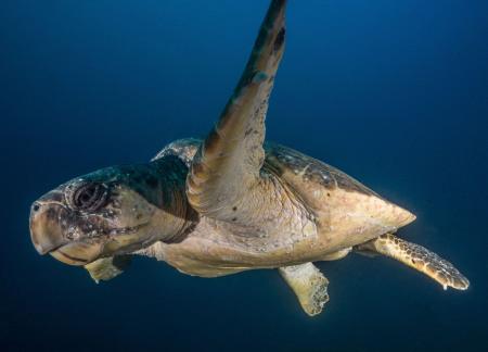Blue Ocean Dive Resort,Umkomaas Aliwal Shoal,Südafrika