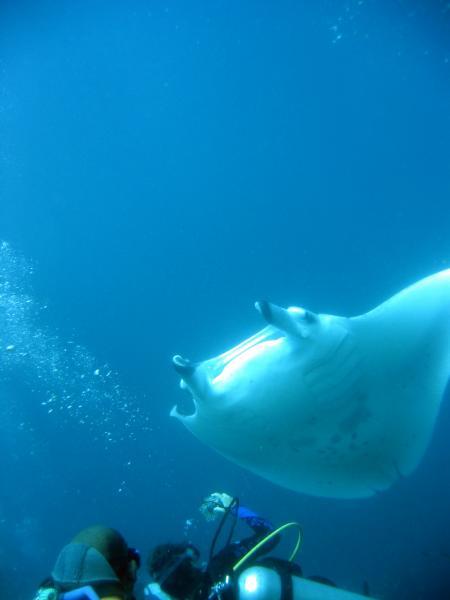 Mirihi,Ocean Pro,Malediven
