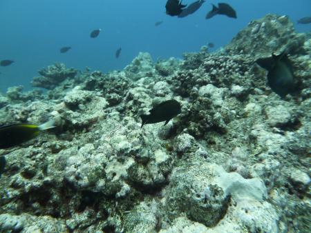 Moorea verschiedene Tauchplätze,Französisch-Polynesien