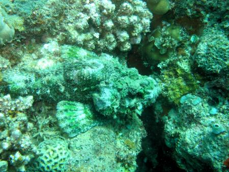 Takatuka Lodge and Dive Resort,Sipalay Negros,Philippinen