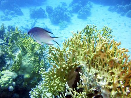 Sataya Dolphin Reef,Ägypten