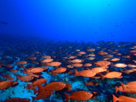 Aqua Tiki II,Katamaran,Fakarava,Französisch-Polynesien