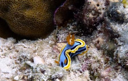 Dive & Adventure Philippines (Anda & Panglao,Bohol),Philippinen
