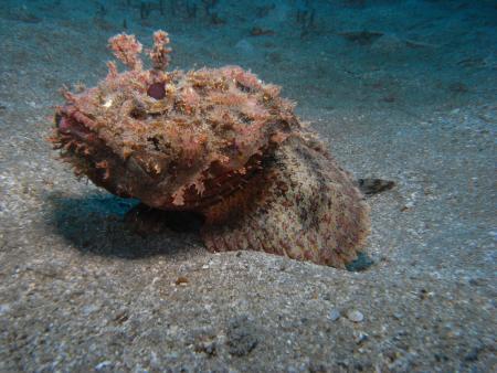 East Carib Dive,Salisbury,Dominica