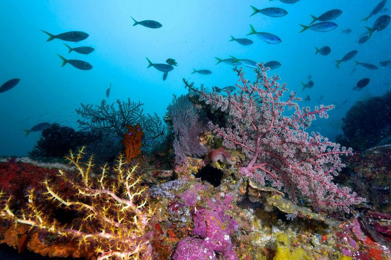 Diving with Rabaul dive Adventures