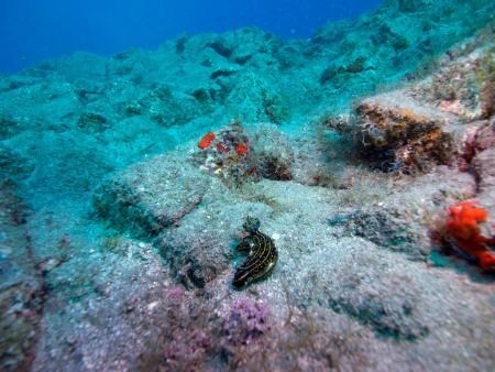 Wannadive,Teneriffa,Kanarische Inseln,Spanien