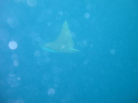 Velavaru,Ocean Pro,Malediven
