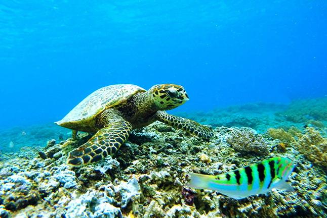 Turtle Reef, Thailand, Andamanensee
