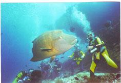 olhuveli süd male, Olhuveli (Süd-Male-Atoll),Malediven