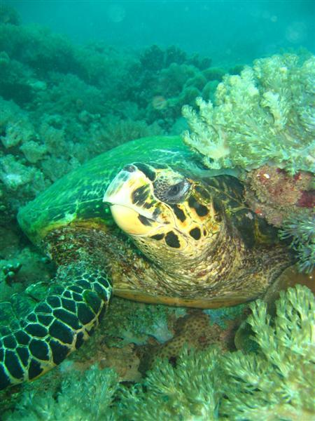 Buccaneer Diving,Mombasa North Coast,Kenia