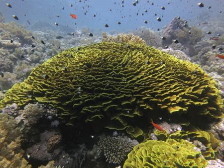 Millennium Divers Sharm Plaza,Sinai-Süd bis Nabq,Ägypten