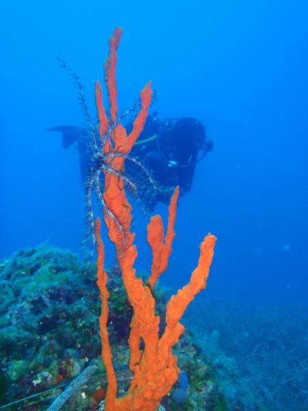 Dive Easy,Acharavi,Korfu,Griechenland
