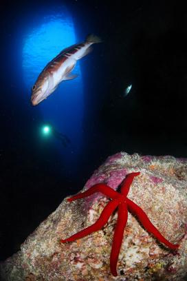 Tauchplatz Marinepark Ilheus, Pico Sport Azoren, Pico Sport Scuba Diving & Whale Watching, Portugal, Azoren