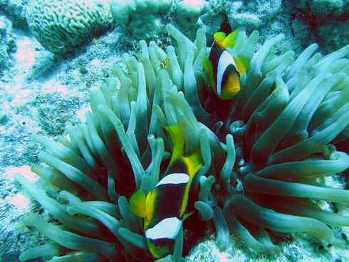 Hurghada - Fanadir Island, El Fanadir (Hurghada),Ägypten