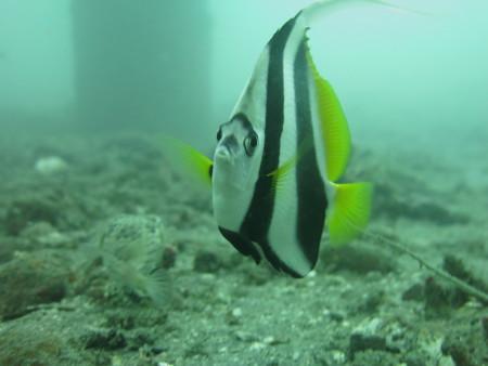diving.DE Candidasa,Candi Beach,Bali,Indonesien