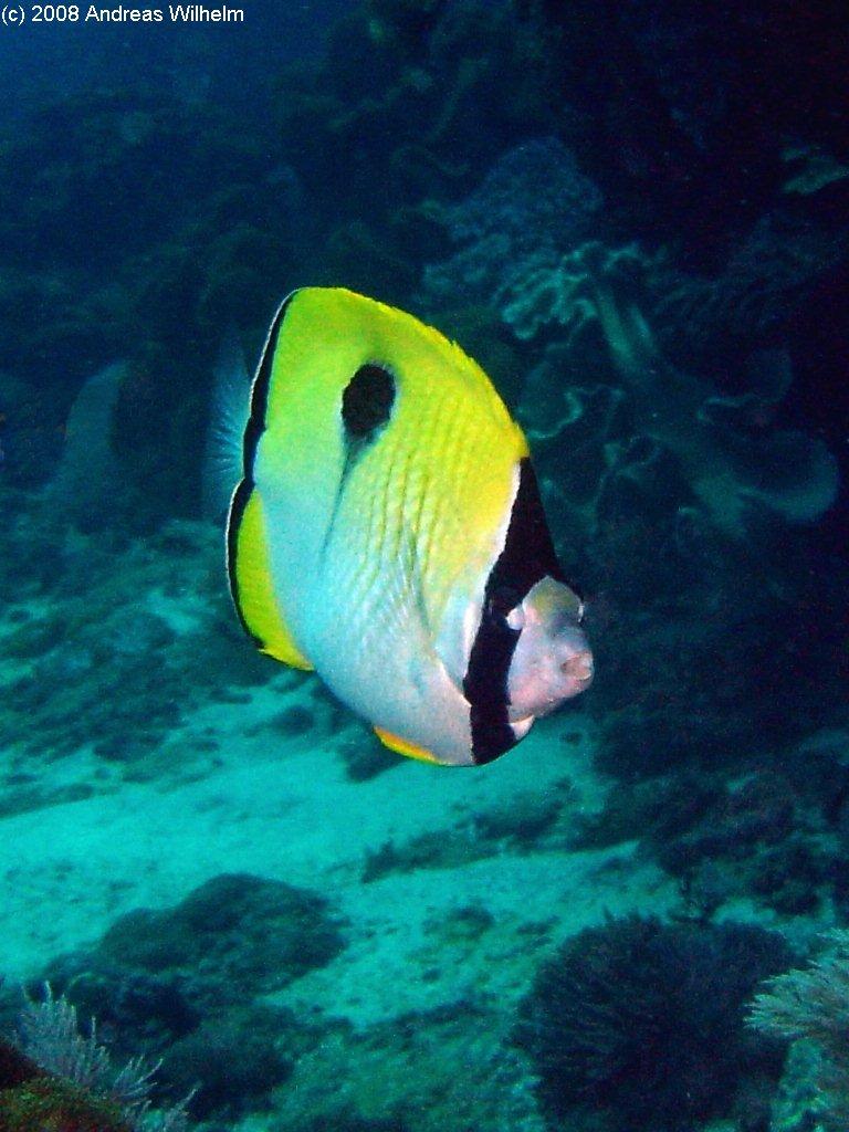 Nusa Penida - Crystal Bay, Nusa Penida,Indonesien