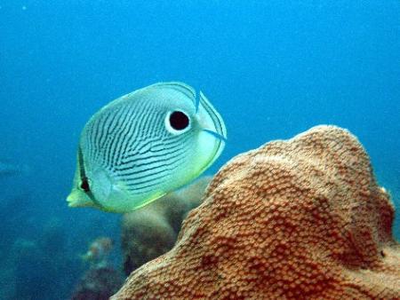 Pirate´s Cove Dive Center,Juan Dolio,Dominikanische Republik