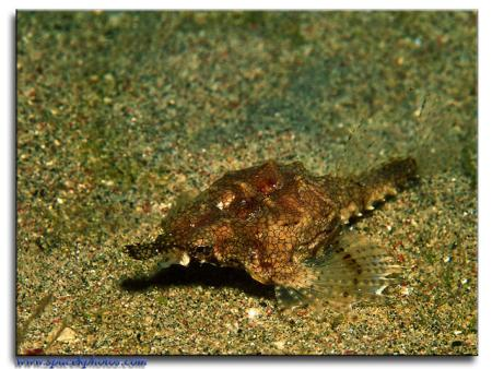 Sabang Divers,Sabang Beach Mindoro,Philippinen