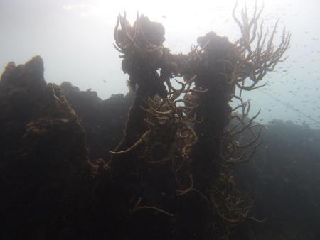 Busuanga Sea Dive Resort,Philippinen