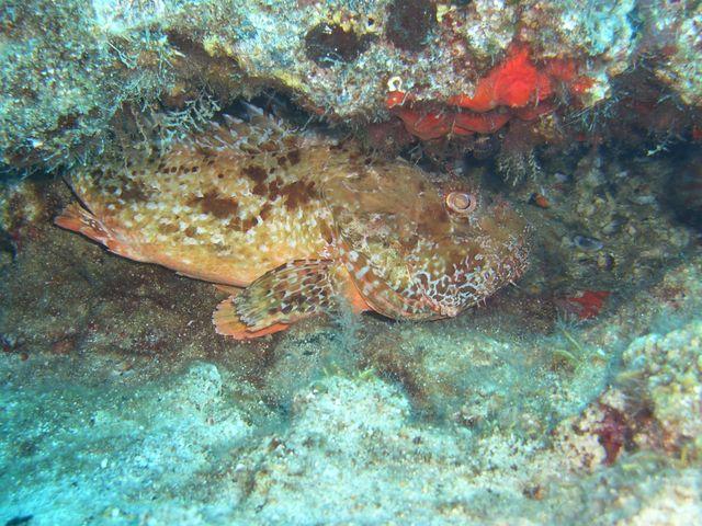 3 inseln, camyuva - kemer, 3-Inseln vor Tekirova,Türkei