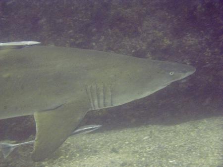 Dive-Down,Phuket,Wolf Rock,Rainbow Beach,Queensland,Andamanensee,Thailand,Australien