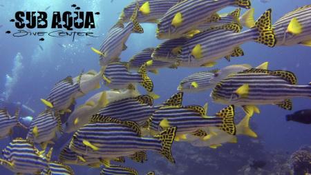 Aquarium - Lohifushi,Malediven