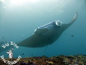 Big Blue - Dive Academy, Österreich