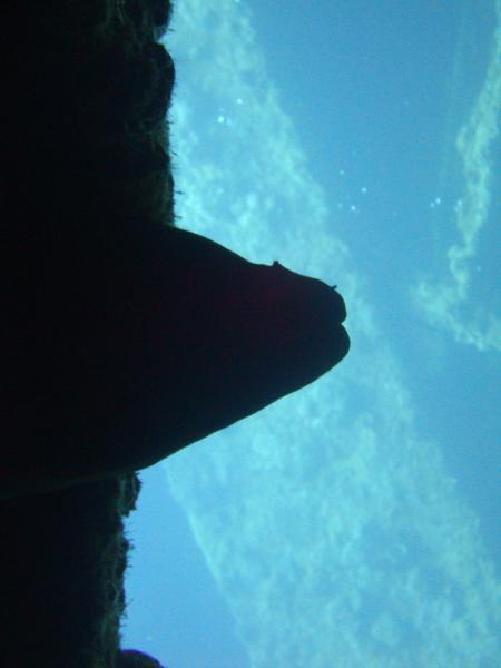 Mirage Divers,Sinai-Nord ab Dahab,Ägypten