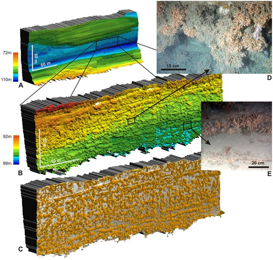 Innovative Mapping Reveals Cold-Water Coral Refuge in Submarine Canyon, © 2011 Huvenne et al.
