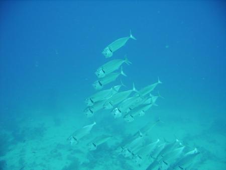 Baracuda DC,Lahami Bay,Marsa Alam und südlich,Ägypten