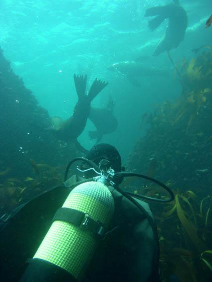 Flow-In & Social Diving Club,Cape Town,Südafrika
