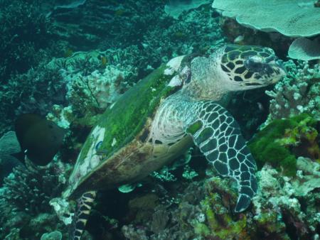 Aladdin Dive Safari,Koh Chang,Ranong,Andamanensee,Thailand