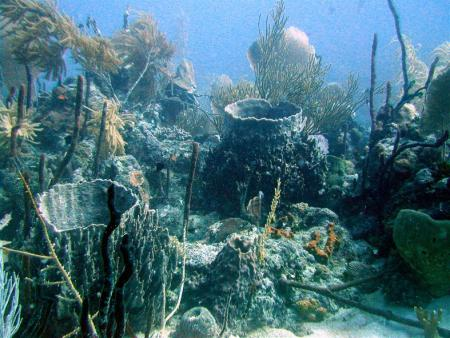 Pirate´s Cove Dive Center,Juan Dolio,Dominikanische Republik