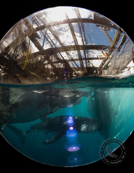 Walhaie und mehr...., Cendrawasih Bay,Indonesien