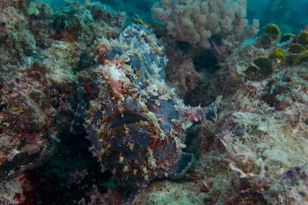 Diving Poseidon,Nungwi - Sansibar,Tansania