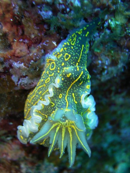 Zante Diving,Zakynthos,Laganas,Griechenland
