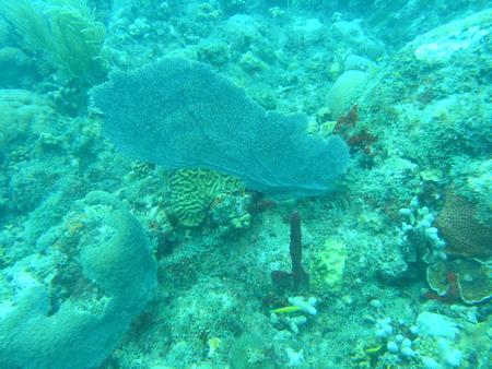 Dragon Bay,Marine Park,Grenada