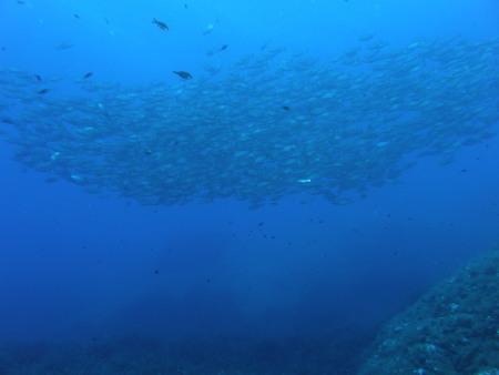 Albatros Diving,Cala Bona,Mallorca,Balearen,Spanien